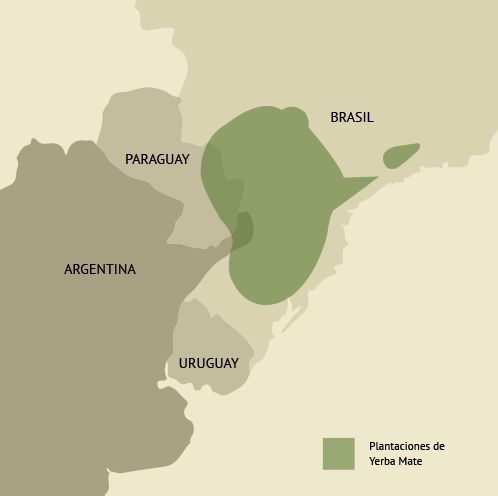 Plantaciones de ilex paraguariensis